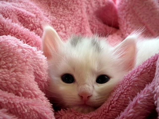 10 najzanimljivih činjenica o mačkama