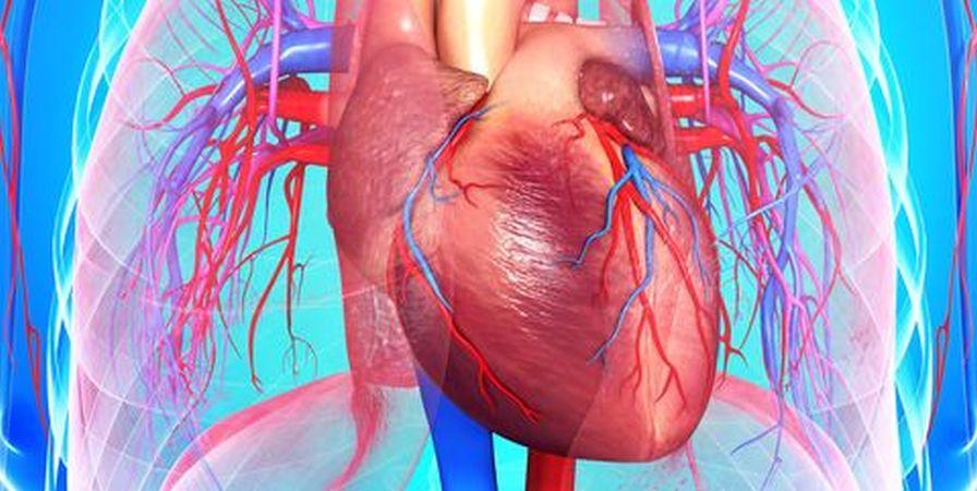 Jeste li znali da fizička (ne)aktivnost određuje oblik srca?