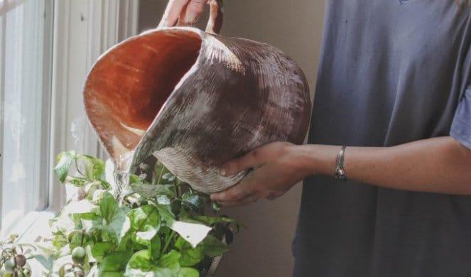 Kako spasiti uvelu biljku nakon godišnjeg